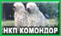 Национальный клуб КОМОНДОР